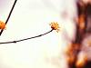 Re:봄이 왔어여~..
