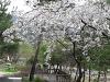 화려한 봄날은 가..