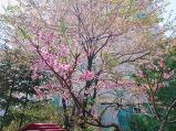 나무에 꽃들이 피..
