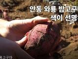 안동와룡고구마 !..