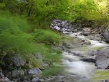 5월의 계곡(May Valley) ..