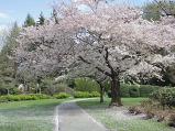 봄 하면 벗꽃~~이..