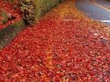 11월의 풍경들