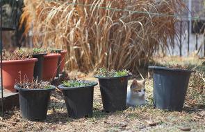 <행복한 고양이 엽서 2277> : 화분 넷, 고양이 하나