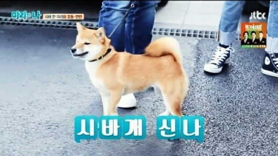 아오~씐나!/사진= JTBC '마리와 나' 캡처