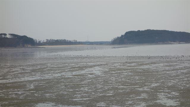 서천 금강하구 연안습지(갯벌)의 전경. 국립생태원 제공