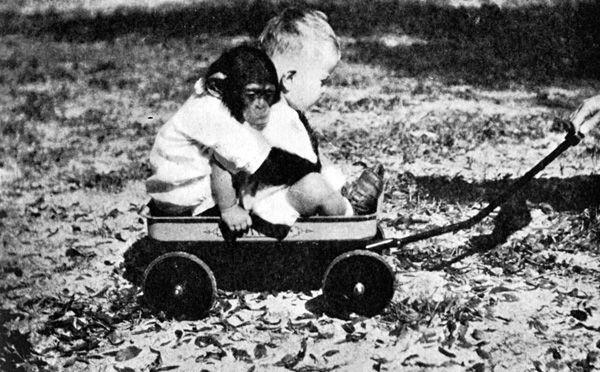 26289b46d1d94fa886ff53ae4a7fb455 - チンパンジーと一緒に育った子供。衝撃的な実験の結末とは!?