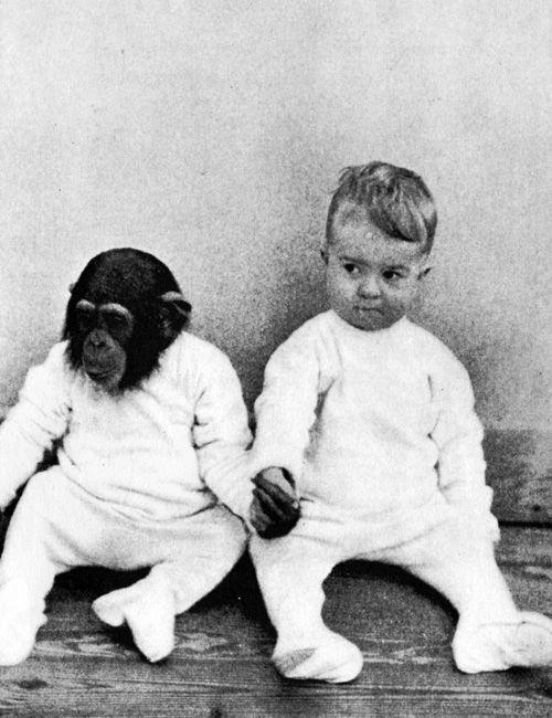 264b9d741e0d48f4aaf9877632c9467c - チンパンジーと一緒に育った子供。衝撃的な実験の結末とは!?
