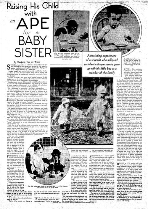 f1fce9b272b94e5e8bc14b5702d688fa - チンパンジーと一緒に育った子供。衝撃的な実験の結末とは!?