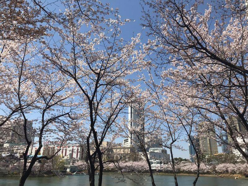 벚꽃구경 - 공부하면서 바람 쐬기, 자연이 주는 10분의 힐링 ♥