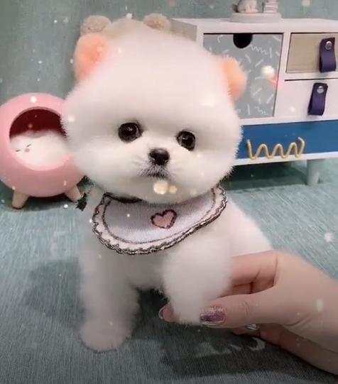 말썽꾸러기 아기동물들 하지만 귀엽죠 ㅎㅎ