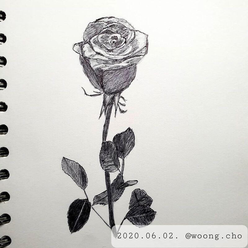 2020.06.02. rose sketch drawing