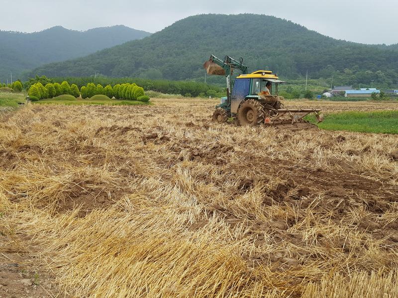 콩밭 로터리 작업