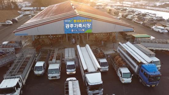 '다큐멘터리 3일' 우보만리 공주 가축시장 72시간