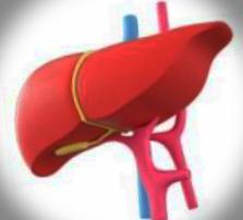 급성 간부전 증상과 치료방법