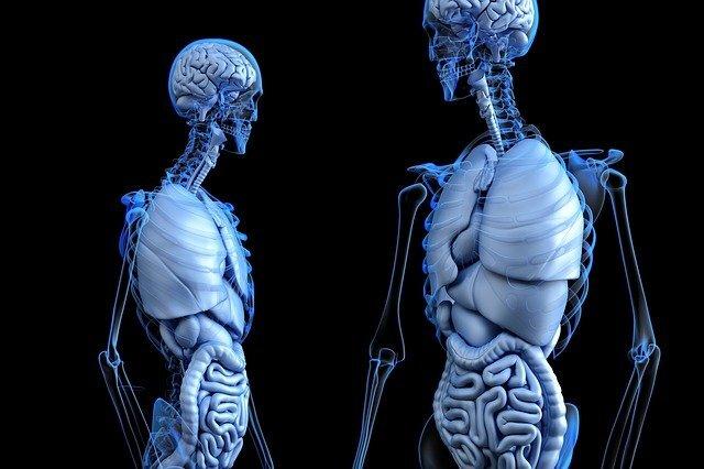 폐렴의 원인, 폐렴의 증상, 폐렴의 예방,폐렴의 치료방법