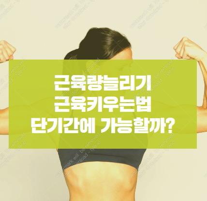 단기간다이어트는 근육량늘리기 근육키우는법을 알아야 한다