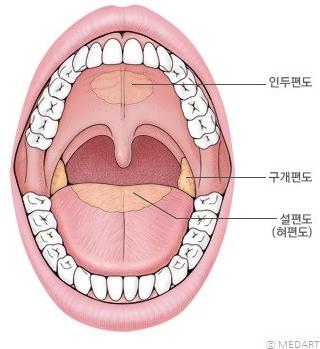 [하나상생할 팁 : 편도결석, 편도염]내 입에서 입 냄새가? 편도에 대해 알아봐요! 좋구만