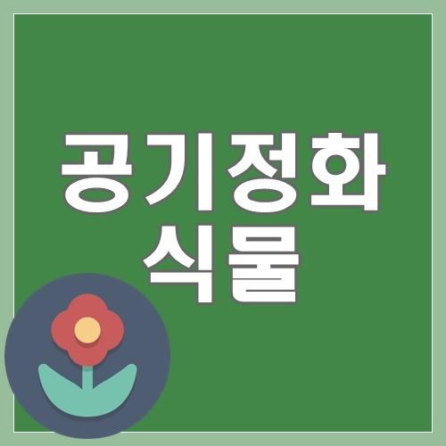 공기정화식물 BEST5