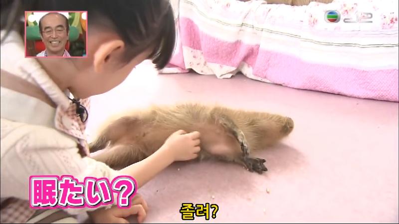 2010년 10월 30일 방송된 일본 니혼 TV 버라이어티 예능 천재! 시무라 동물원(天才!志村どうぶつ園) 에 출연 카피바라와 만나게 된 그녀 아시다 마나