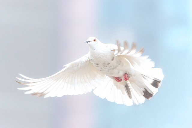 관심종목 평화산업 - 볼린져밴드 하한선 상향돌파