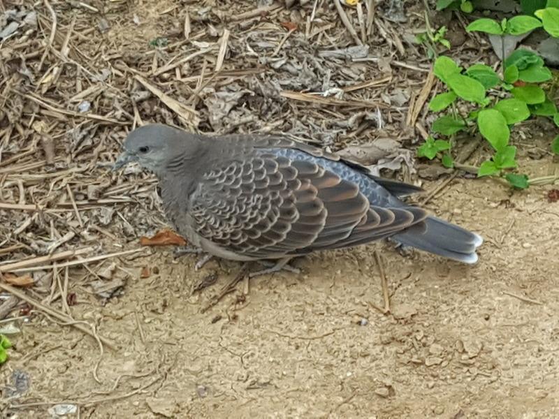 집 방문한 비둘기