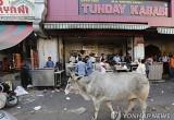 소 신성시하는 인도, 실은 세계 최대 소고기 수출국