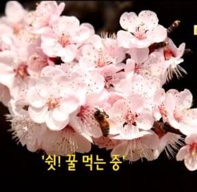 [한컷 뉴스] 쉿! 꿀 먹는 중 外