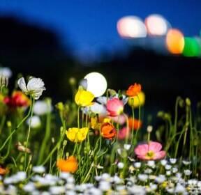 [포토친구] 밤도 아름다운 5월
