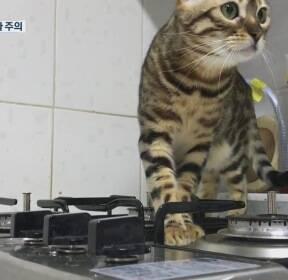 스위치 켠 고양이..반려동물 화재 주의