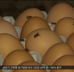 '살충제 달걀' 6곳 중 5곳이 친환경 인증..소비자 분통