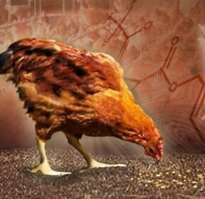 [뉴스초점] 닭에서도 나온 DDT..계란 도매가는 폭락