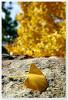 가을의 마지막
