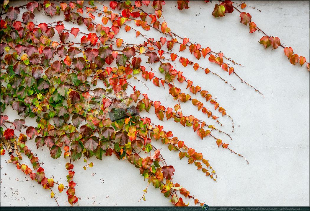 풍경 - (가을, 단풍잎)