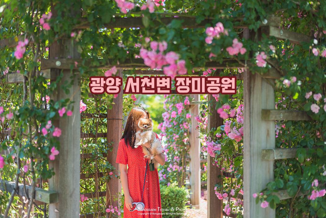 장미 향기가 가득한 아름다운 꽃길, 서천변 장미공원