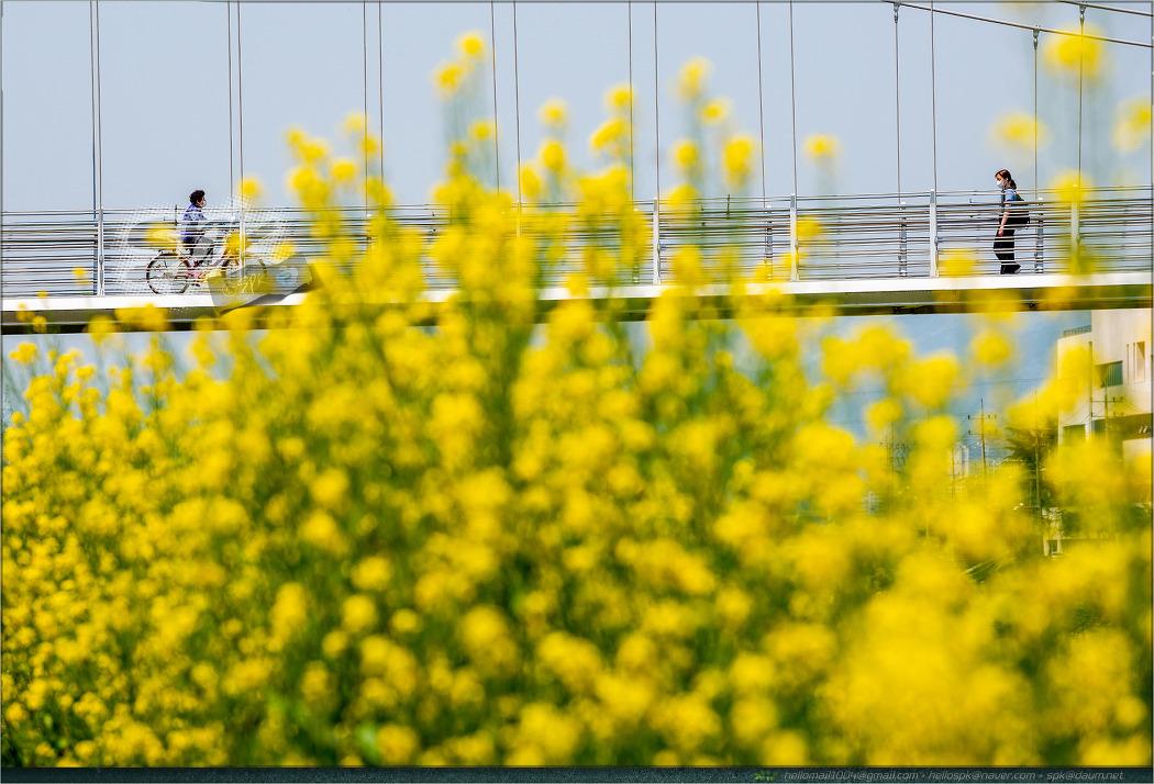 2021, 경산 남천 강변의 봄