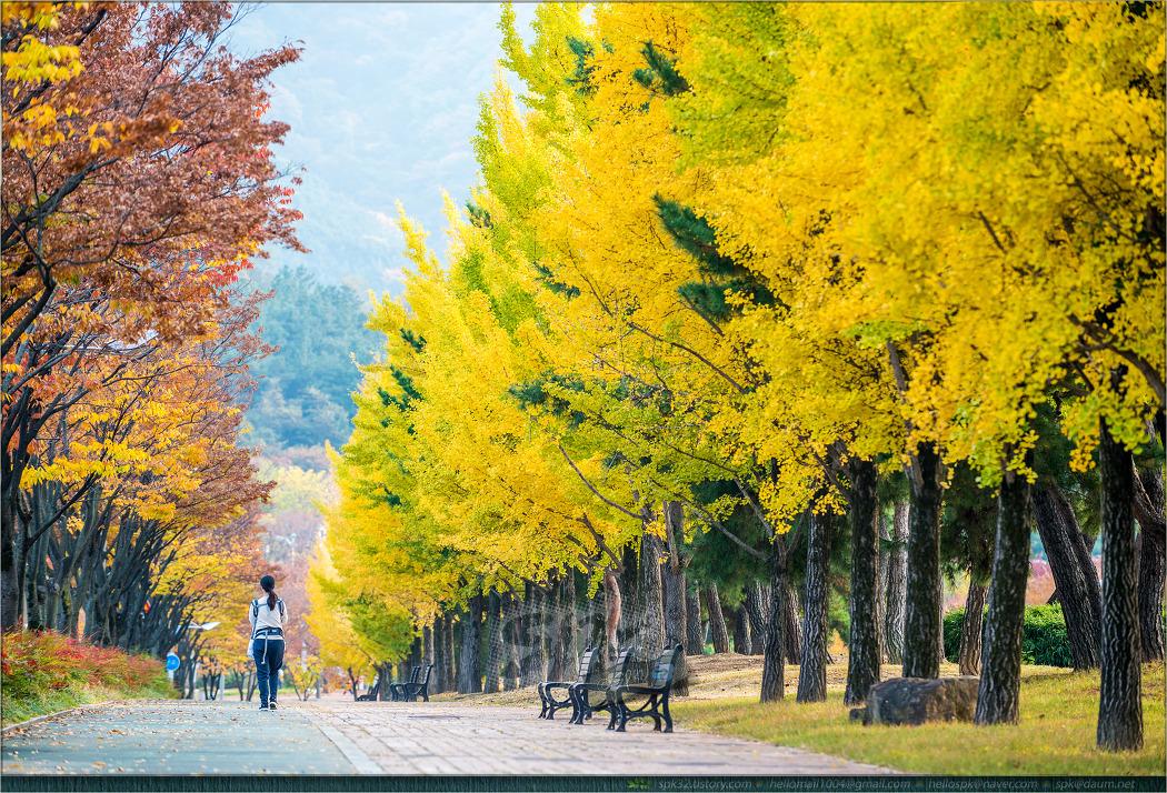 풍경 - 가을 (1)