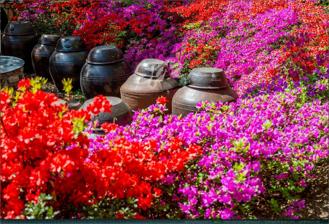 대구 '월곡역사공원'의 봄