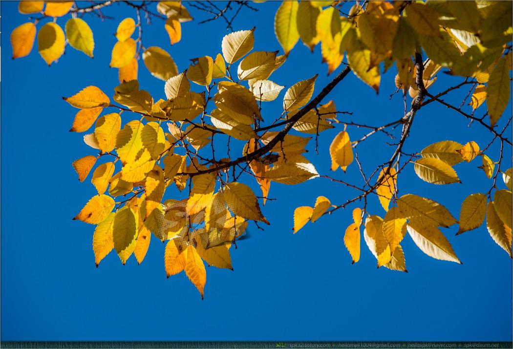 풍경 - 가을 (2)