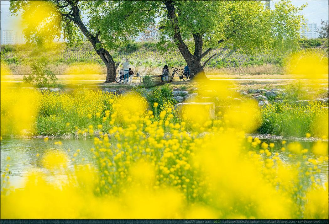 경산 남천변의 봄 풍경