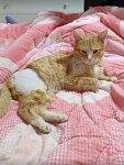 [마실통신 4월호] 총 맞은 고양이 '호돌이' 치료비를 위한 '만원의 릴레이'