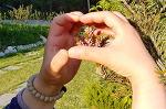 [행복찾기] 매년 야생화가 하나씩 더해지는 죽풍원에서 풍성한 봄을 느낍니다/행복찾기프로젝트연구소 죽풍원에 핀 야생화