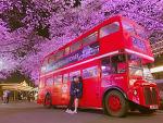 봄여행! 이랜드 대구 이월드 별빛 벚꽃 축제, 국내 최대 높이 스카이드롭 가볼까요?