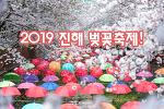 2019 진해 벚꽃축제, 도시 전체가 분홍빛으로 물들었다!
