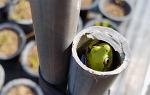 [행복찾기] 청개구리는 1.5m 높이의 직각 쇠파이프를 어떻게 타고 올랐을까/전래 동화 청개구리 이야기, 청개구리 이야기에서 배우는 교훈/죽풍원의 행복찾기프로젝트