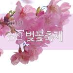 2019 울산 벚꽃축제
