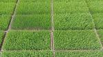 [농사일기] 벼의 재배과정은 어떤 순서를 거쳐야 할까/올 가을 풍년농사가 되었으면 좋겠다/함양행복찾기농원에서 행복찾기프로젝트 가동