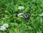 광릉숲에서 만난 나비
