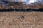 송골매의 사냥