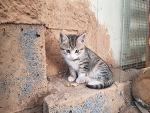 고양이 꾹꾹이 이유